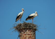 Duas cegonhas brancas em um ninho sobre uma chaminé Fotografia de Stock Royalty Free