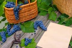 Duas cestas com uvas e secateurs ao lado da folha de papel na madeira rústica Fundo da fatura de vinho imagem de stock