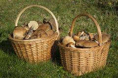 Duas cestas completamente dos cogumelos imagens de stock