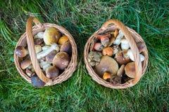 Duas cestas de vime com os cogumelos comestíveis na grama Imagens de Stock Royalty Free