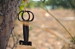 Duas chaves de esqueleto antigas que penduram de uma árvore Fotografia de Stock