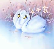 Duas cisnes brancas Fotografia de Stock