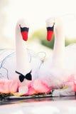 Duas cisnes brancas Imagens de Stock Royalty Free