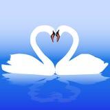 Duas cisnes brancas com amor. ilustração do vetor
