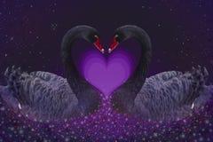 Duas cisnes pretas ilustração royalty free