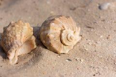 Duas conchas do mar no close up branco da areia Conceito dos escudos Decoração do porto Vida de mar foto de stock royalty free