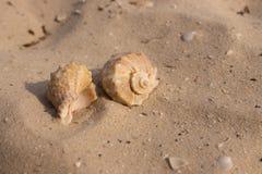Duas conchas do mar no close up branco da areia Conceito dos escudos Decoração do porto Vida de mar imagem de stock royalty free