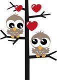 duas corujas doces em um amor da árvore Foto de Stock