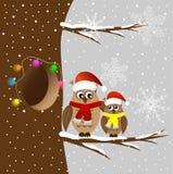 Duas corujas que sentam-se em um ramo de árvore Foto de Stock Royalty Free