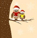 Duas corujas que sentam-se em um ramo de árvore Imagens de Stock