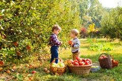 Duas crianças com as maçãs em suas mãos no pomar do outono fotografia de stock royalty free