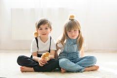 Duas crianças dos irmãos, jogando com os pintainhos recém-nascidos pequenos Foto de Stock