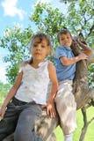 Duas crianças sentam-se no tambor grosso do lilac foto de stock