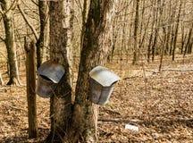 Duas cubetas na árvore de bordo que recolhe a seiva - 2 foto de stock royalty free