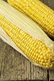 Duas espigas de milho Foto de Stock