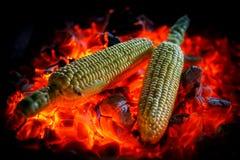 Duas espigas de milho maduras são fritadas em carvões encarnados, close-up fotografia de stock