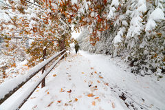 Duas estações - cena do inverno e do outono no parque Foto de Stock