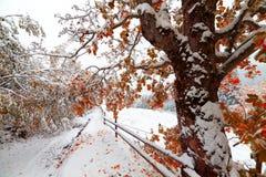 Duas estações - cena do inverno e do outono no parque Imagens de Stock Royalty Free