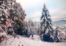 Duas estações - cena do inverno e do outono no parque Imagens de Stock