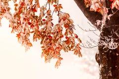 Duas estações - cena do inverno e do outono no parque Imagem de Stock Royalty Free