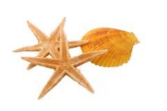 Duas estrelas do mar e um Shell no fundo branco Fotografia de Stock