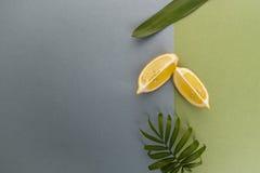Duas fatias de folhas do limão e do verde em uma parte traseira azul esverdeado da cor pastel Imagem de Stock