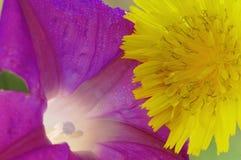 Duas flores Imagens de Stock