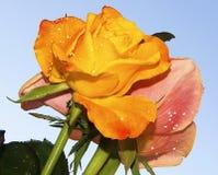 Duas flores Imagens de Stock Royalty Free