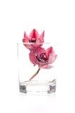 Duas flores da orquídea em um vidro Fotografia de Stock Royalty Free