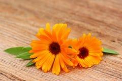 Duas flores de um calendula em um de madeira velho Imagem de Stock Royalty Free