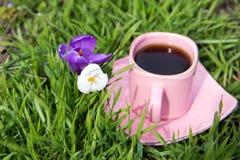 Duas flores do açafrão, branco e roxo, com uma xícara de café cor-de-rosa Foto de Stock