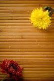 Duas flores e gotas Fotografia de Stock Royalty Free