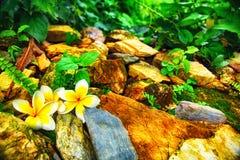 Duas flores entre pedras Fotografia de Stock Royalty Free