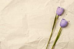 Duas flores violetas Foto de Stock