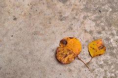 Duas folhas amarelas da queda no fundo concreto Fotografia de Stock Royalty Free
