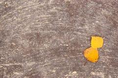 Duas folhas amarelas do outono em uma superfície concreta salpicaram com o pa Fotos de Stock Royalty Free