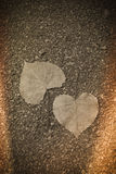 Duas folhas da forma do coração no outono Fotos de Stock