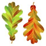 Duas folhas do carvalho do outono isoladas no fundo branco Ilustração do vetor Fotografia de Stock