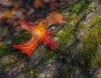 Duas folhas em um log Foto de Stock