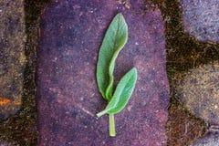 Duas folhas verdes em uma pedra vermelha velha imagem de stock royalty free