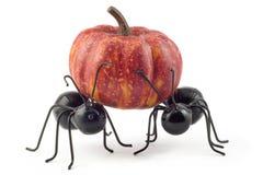 Duas formigas pretas que carreg o conceito da abóbora foto de stock royalty free