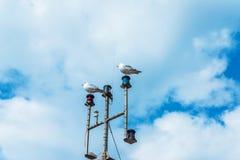 Duas gaivotas no mastro do navio, na cidade costeira, selvagem Fotos de Stock Royalty Free
