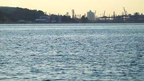 Duas gaivotas que voam sobre o mar video estoque