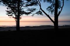 Duas grandes árvores no fundo de um por do sol perto do mar Imagens de Stock