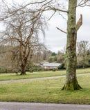 Duas grandes árvores nos gramados fotos de stock royalty free