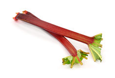 Duas hastes do rhubarb Foto de Stock