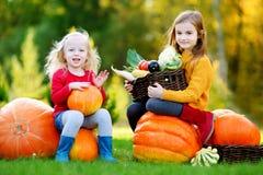 Duas irmãs mais nova bonitas que têm o divertimento junto em um remendo da abóbora Fotografia de Stock