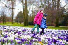 Duas irmãs mais nova que escolhem o açafrão florescem no prado de florescência bonito do açafrão Fotos de Stock