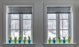 Duas janelas decoradas com os vasos de flores coloridos de narcisos amarelos do anão, narciso primavera com parte externa da neve fotos de stock royalty free