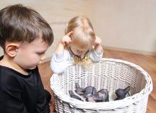 Duas jovens crianças que olham uma maca dos gatinhos Imagem de Stock